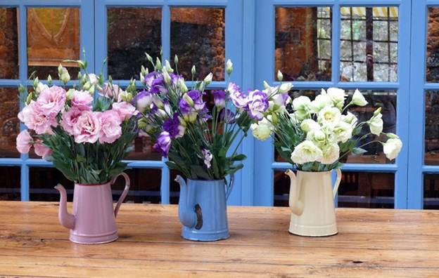 10 555b Trang trí nhà đẹp và tràn đầy sức sống với các chậu hoa tươi