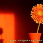 Phong thủy với màu cam