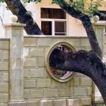 Theo phong thủy, cây to xuyên qua nhà hay ở bên mái nhà là đại hung. (Ảnh minh họa).